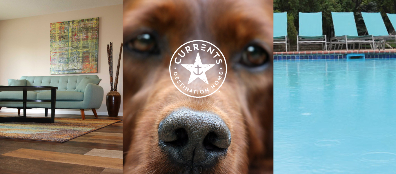 Currents pet friendly apartments
