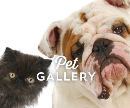 splash-pet-gallery.jpg